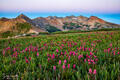 Wildflowers on Indian Trail Ridge
