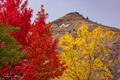 Mount Zion Autumn