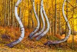 Yoga Trees print