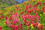 Wildflowers on Stony Pass