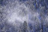 Fresh Snow on Lookout Mountain print