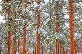 Tuxedo Park Snow