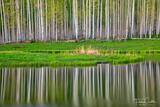Aspen Boles Reflection