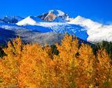 Autumn Gold Below Longs Peak