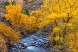 Fall Colors Along Clear Creek