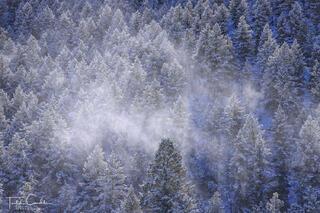 Fresh Snow on Lookout Mountain