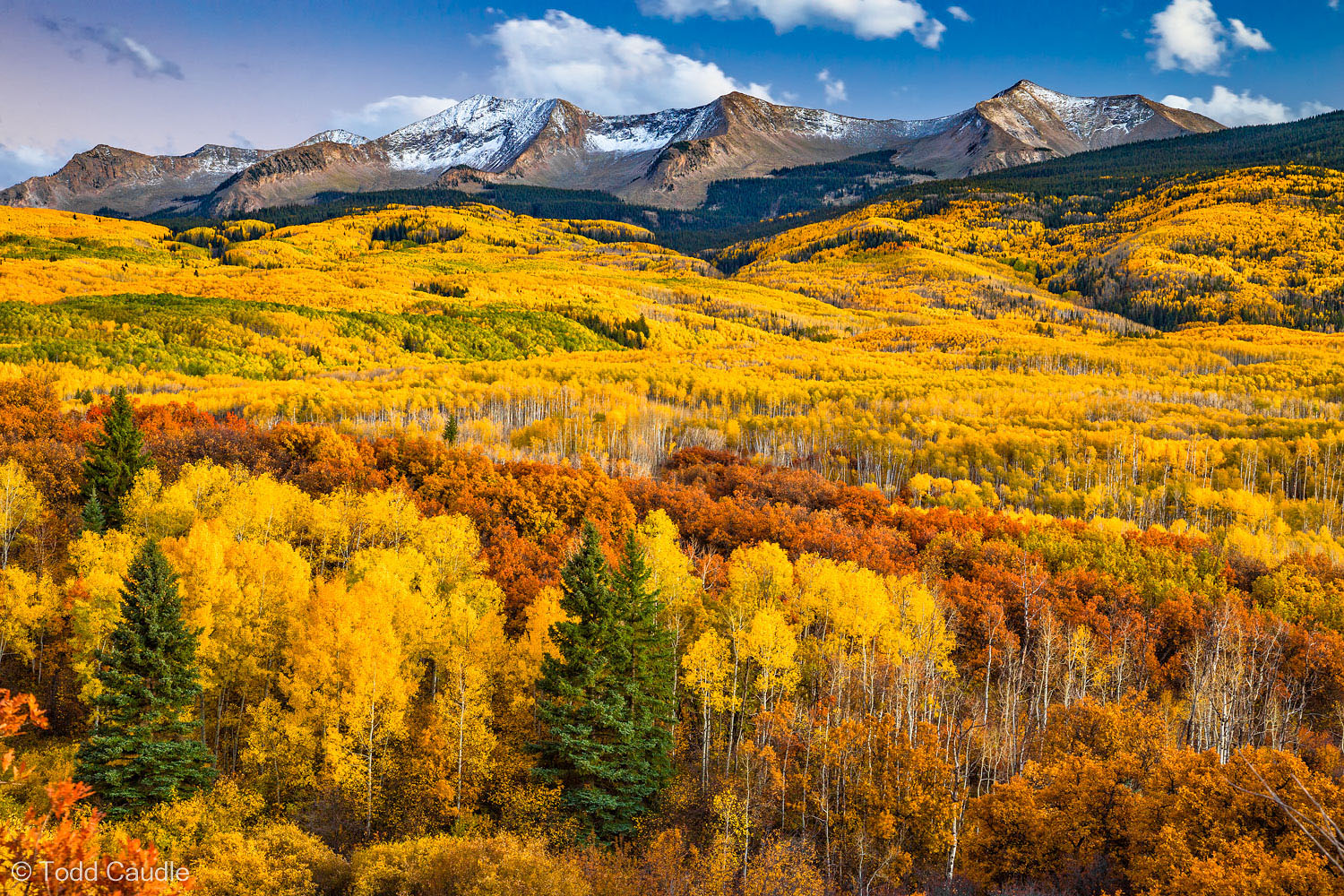 The most extensive aspen forests in Colorado flank the Kebler Pass road that connects the town of Crested Butte with the West...