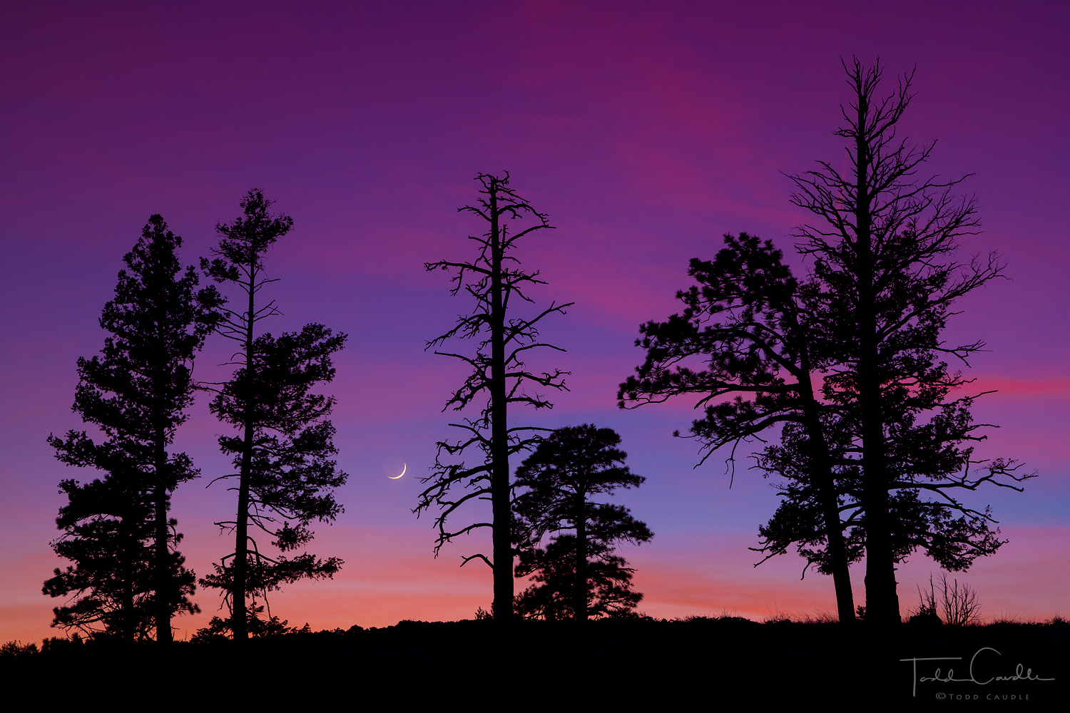 Pastel pinks and purples of a twilight sky are punctuated by tree silhouettes and a crescent moon at Bryce Canyon National Park...