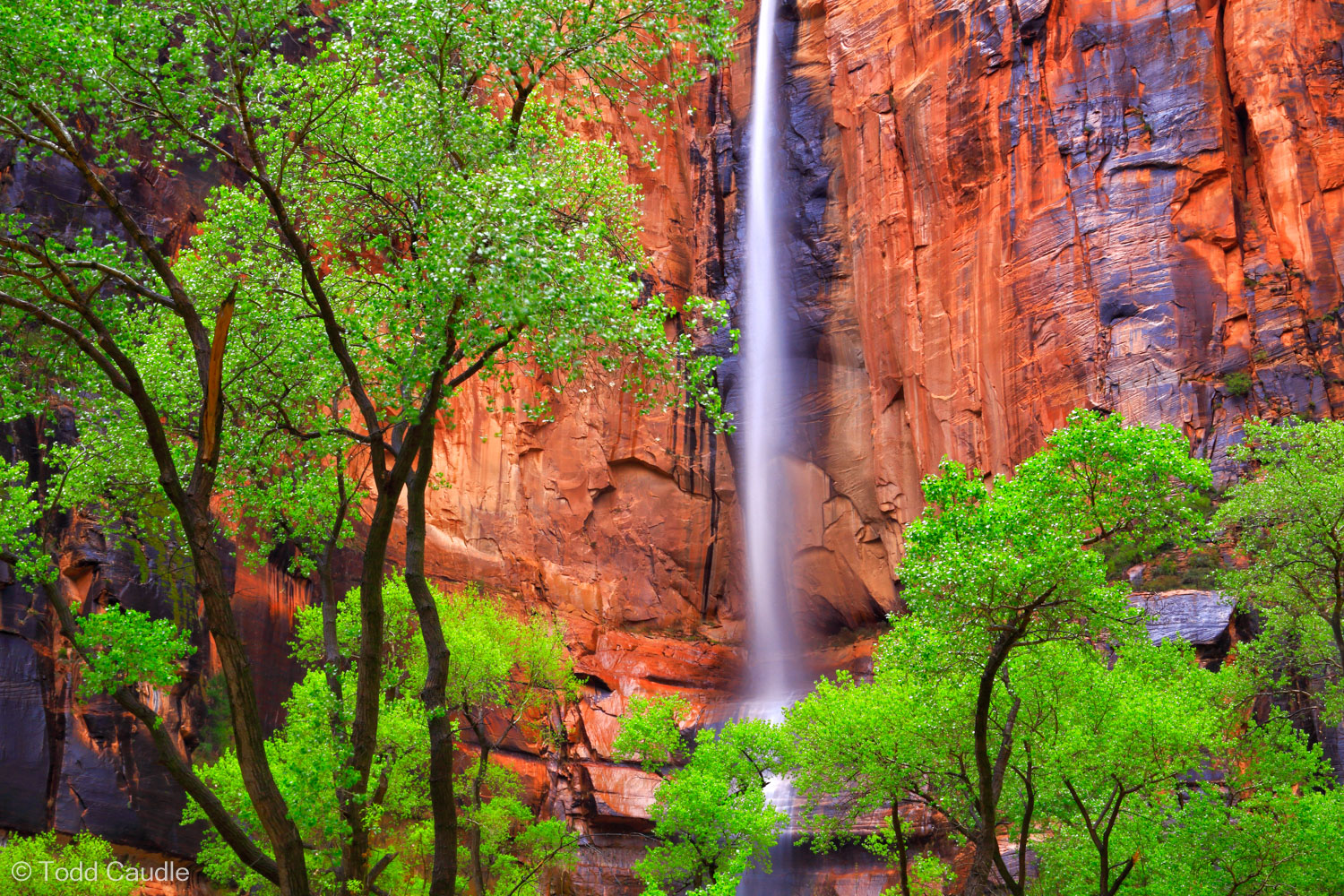 The steep walls of Zion Canyon are usually dry, but when rain storms sweep through the area, waterfalls magically appear. The...