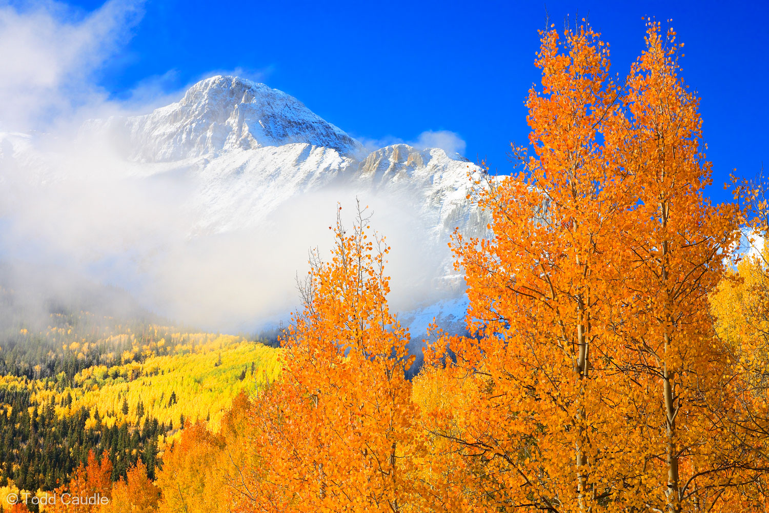 Everyone is familiar with the beautiful golden yellow that Colorado's aspens typically turn in the fall. While somewhat rare...