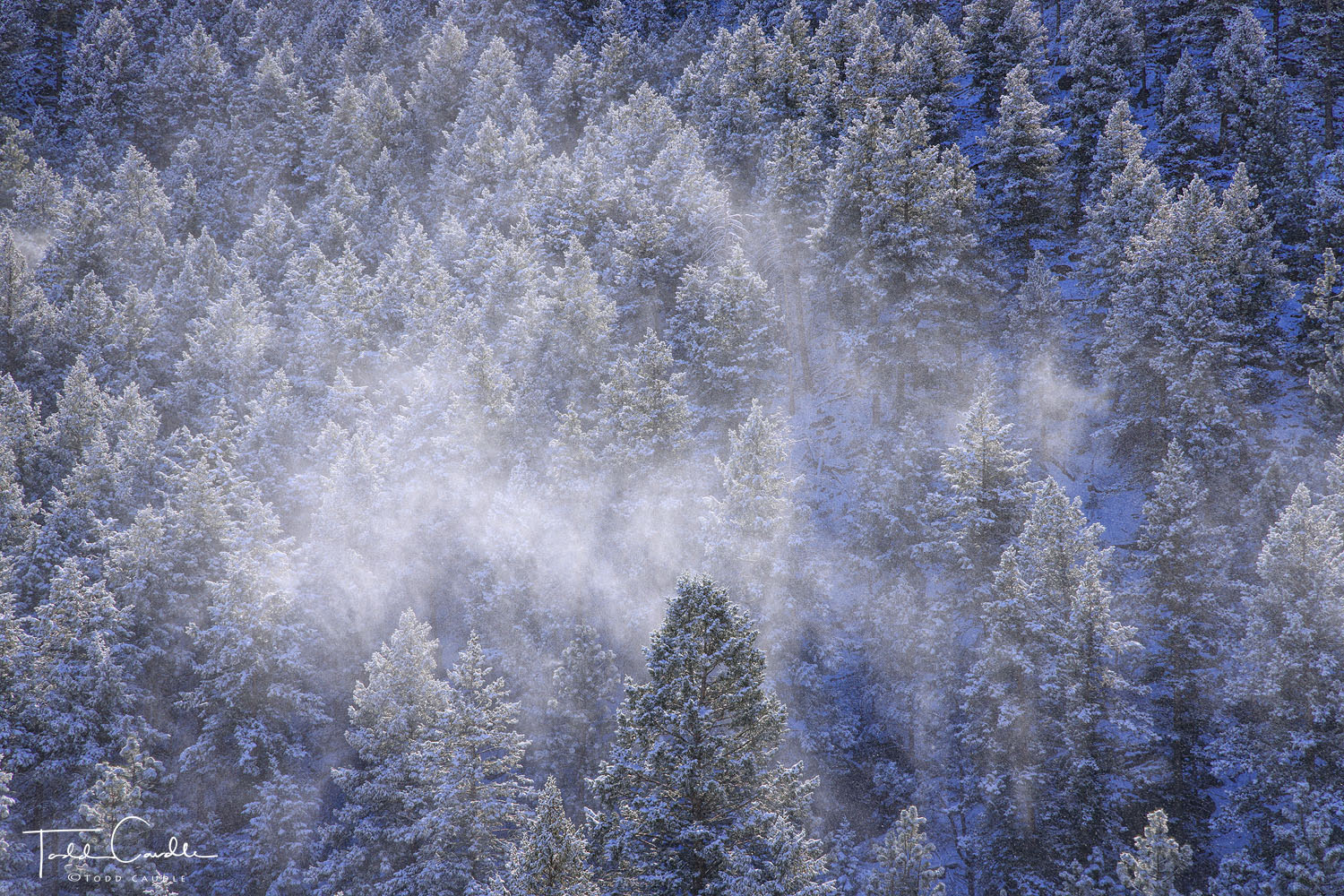 A fierce winter storm leaves behind a sparkling pine forest on Lookout Mountain.