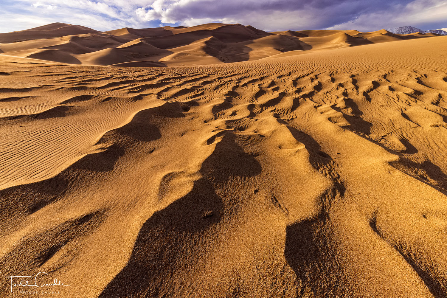 Dune ripples are accentuated by the setting sun at Great Sand Dunes National Park.