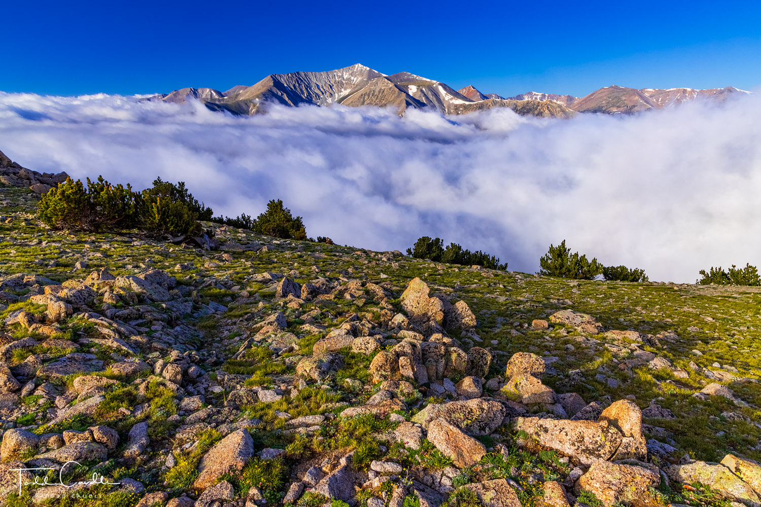 Mount Antero (14,276') rises above a cloud-filled valley. This view is from Bristlecone Park on the southern flank of Mount Princeton...