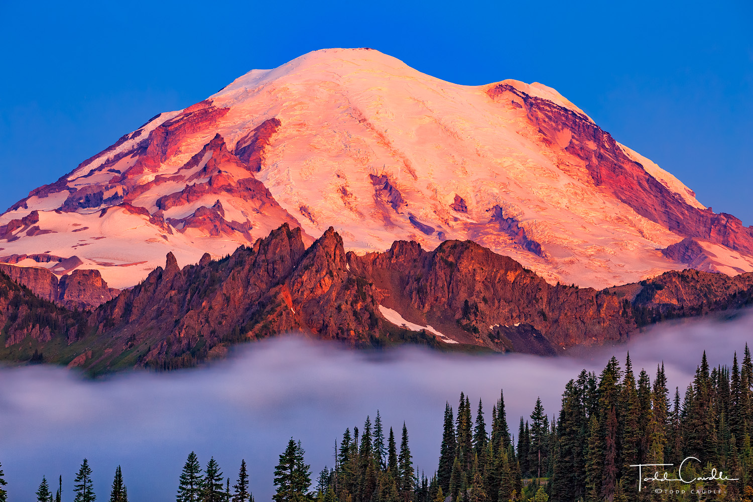 Clouds drift below Cowlitz Ridge as mighty Mount Rainier (elevation 14,411') catches the first blush of sunrise color.