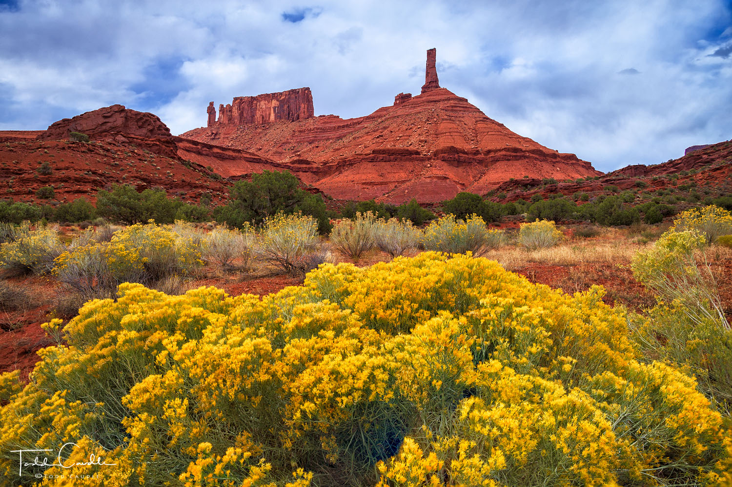 Rabbitbrush proliferates below Castleton Tower and the Priest and Nuns formation in Castle Valley, not far from Moab.
