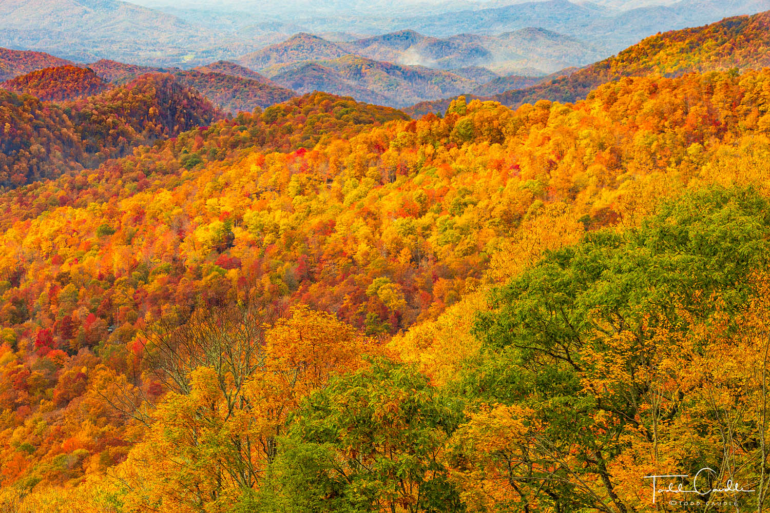 Fall color as far as the eye can see on Thunder Struck Ridge, along the Blue Ridge Parkway in North Carolina.